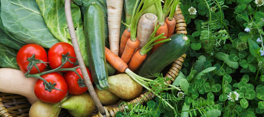 Abnehmcoaching – Schlank ohne Diät