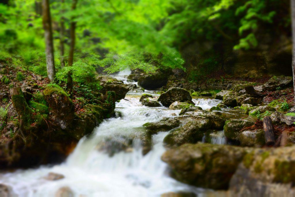 Therapie im Wald